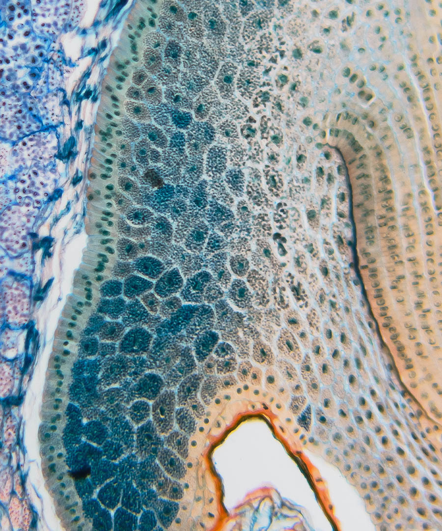 close-up-abstract-blue-green-tissue.jpg (1)